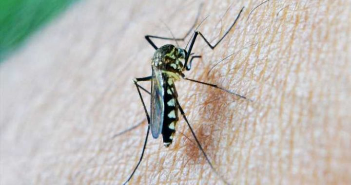 Q&A: Malaria continues to be a significant travel-related disease