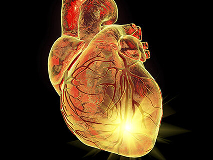 Deciphering the regenerative potential of newborn mammalian hearts