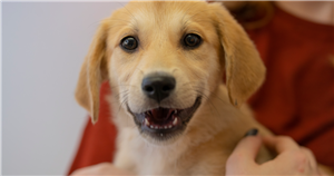 New Jersey Says No to Pet Leasing