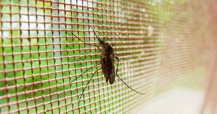 Clinically silent relapsing malaria may still pose a threat