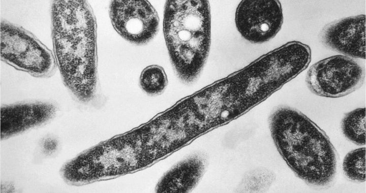 Legionnaires' outbreak linked to North Carolina state fair kills fourth person: officials