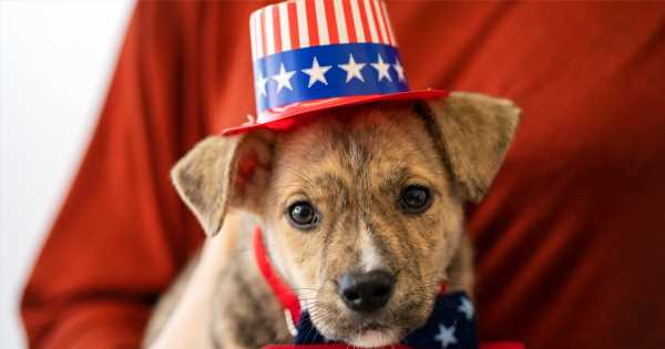 Tomorrow Is Election Day—Make Your Vote Count for Animals!