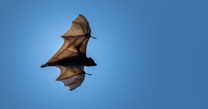 The Novel Coronavirus Originated In Bats, And That's Actually Pretty Common