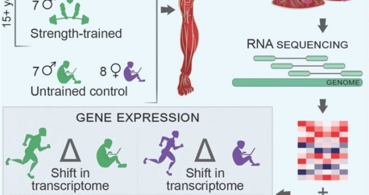 Long-term exercise impacts genes involved in metabolic health