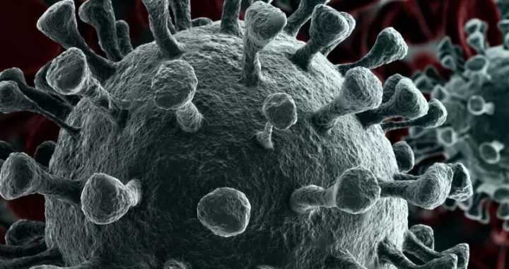 Mutation helps coronavirus infect more human cells, study shows