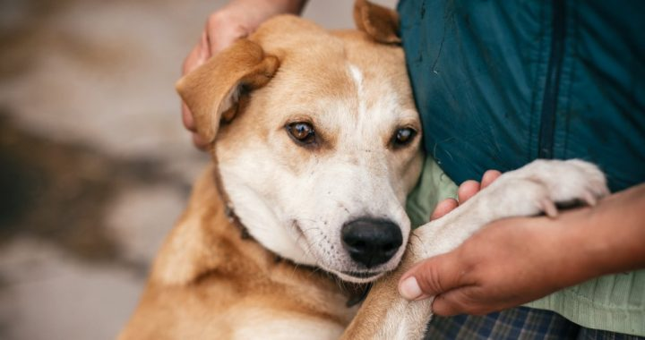 Why you shouldn't put hand sanitizer on your dog's paws