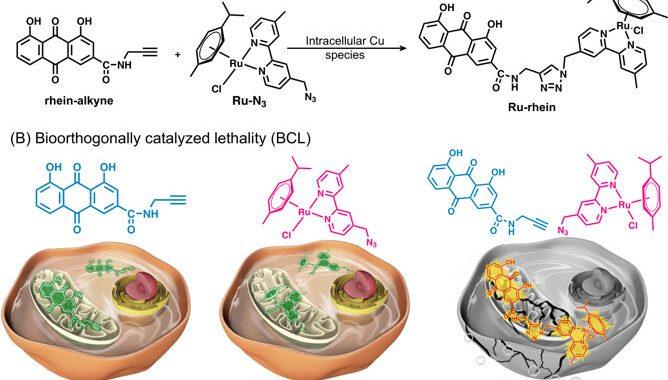 Bio-orthogonally catalyzed lethality strategy generates targeting drugs from within tumors