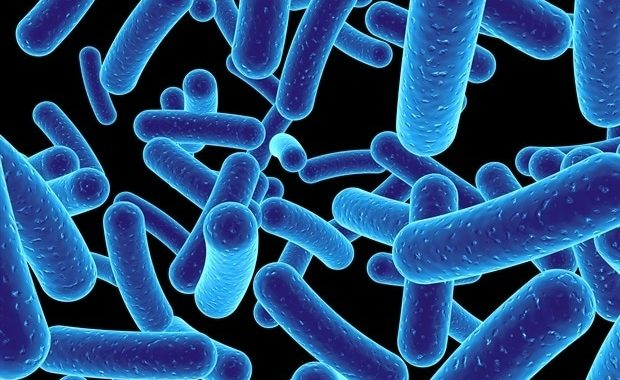 Maintenance of good oral health may help prevent heart infection caused by mouth bacteria