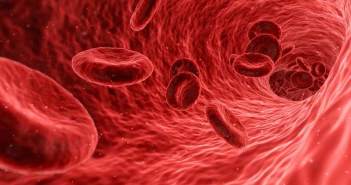 Study finds most common protein in blood is instrumental in enabling human fertilization and fighting infection