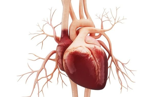 Moderate exercise plus cutting 250 calories daily may improve vascular health in older adults with obesity