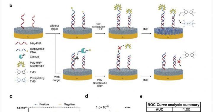 Multiplexed electrochemical sensor platform enables simultaneous detection of SARS-CoV-2 RNA and host antibodies